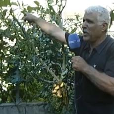 """Μελιτζανοπατατοντοματοβλητοστυφνοπιπεριά !!! Το """"αντισυστημικό δένδρο"""" του Μανώλη Ηλιάκη από το Ρέθυμνο!"""