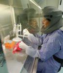 SARS-Coronavirus. ΔΗΜΟΣΙΕΥΜΑ ΑΠΟ ΤΟ 2015 ΓΙΑ ΔΙΕΘΝΕΣ ΠΕΙΡΑΜΑ ΔΗΜΙΟΥΡΓΙΑΣ ΙΟΥ ΣΤΟ ΕΡΓΑΣΤΗΡΙΟ !!!