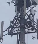 Η ΕΚΔΙΚΗΣΗ ΤΩΝ ΠΟΥΛΙΩΝ !!! ΠΡΟΣΠΑΘΟΥΝ ΝΑ ΚΑΤΑΣΤΡΕΨΟΥΝ ΤΑ ΚΑΛΩΔΙΑ ΚΕΡΑΙΑΣ 5G !!! (video)